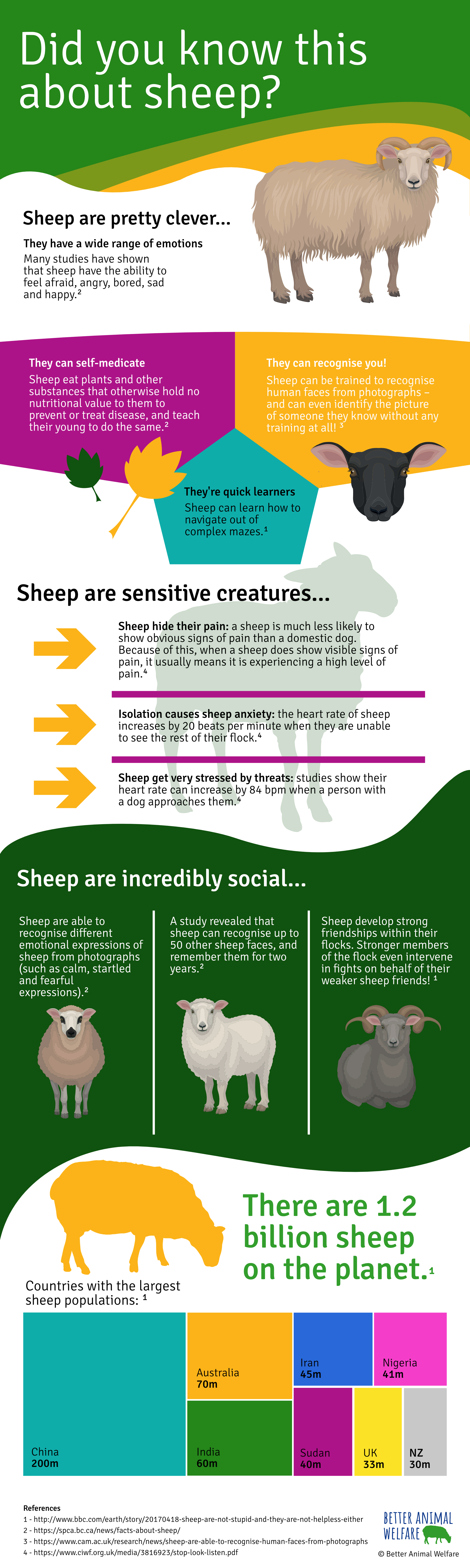 Sheep Facts Infographic - Better Animal Welfare
